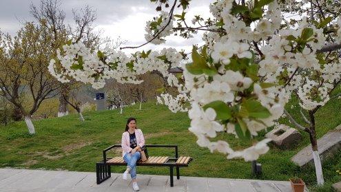 Looks like Sakura Tree